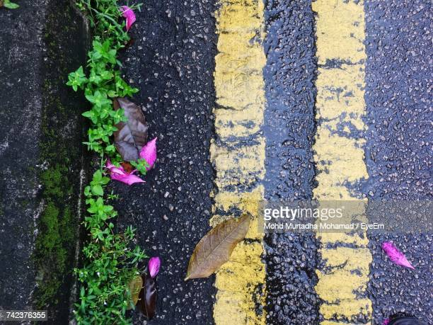High Angle View Of Yellow Flower On Road