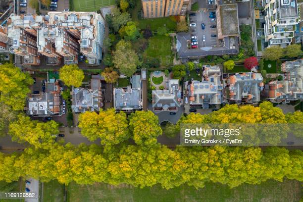 high angle view of yellow flowering plants by buildings - district stock pictures, royalty-free photos & images