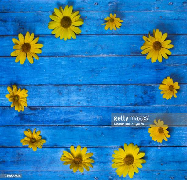 high angle view of yellow flowering plants on wood - eyeem stock pictures, royalty-free photos & images