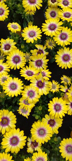 High angle view of yellow flowering plants