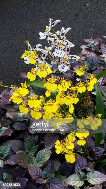 High angle view of yellow flowers in garden