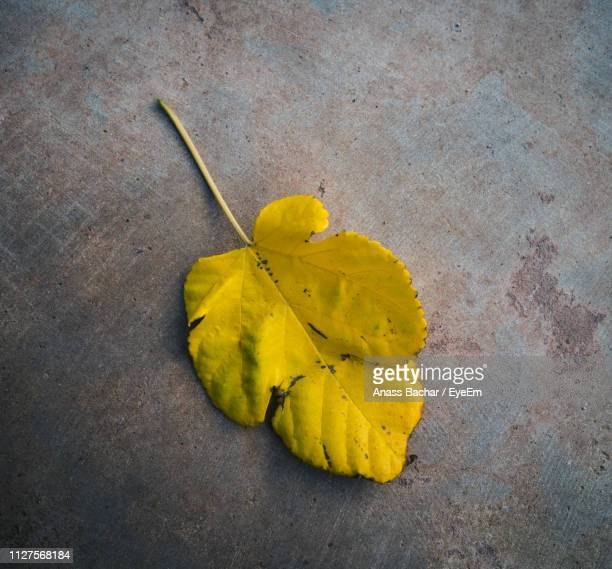High Angle View Of Yellow Leaf On Plant