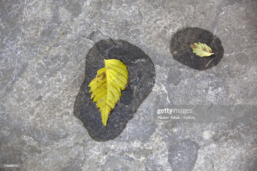 High Angle View Of Yellow Leaves : Stockfoto
