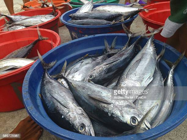 high angle view of yellowfin tunas for sale in container at market - yellowfin tuna stock photos and pictures