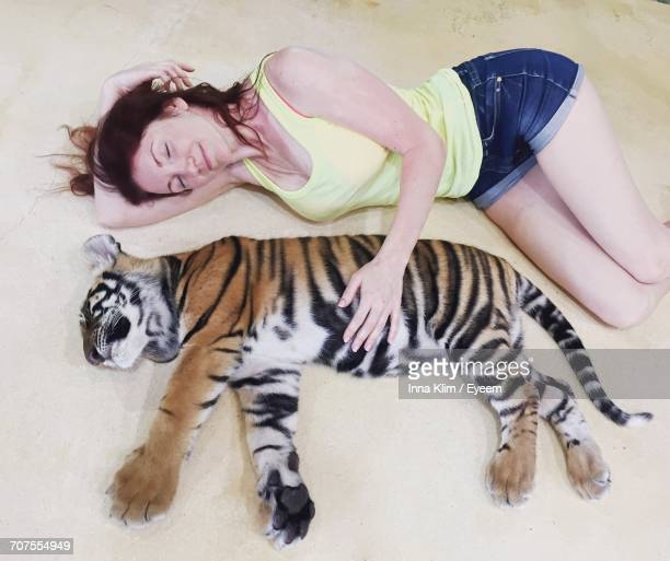 high angle view of young woman with tiger - tiger cub stock photos and pictures