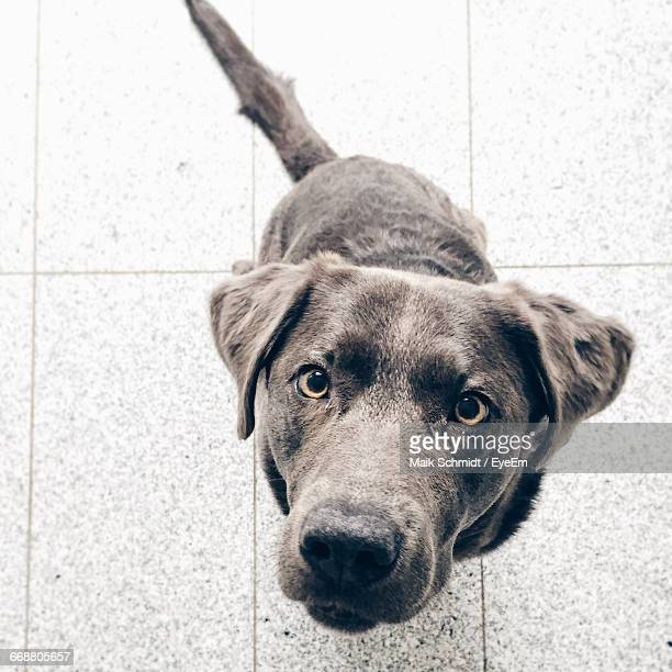 High Angle View Portrait Of A Dog