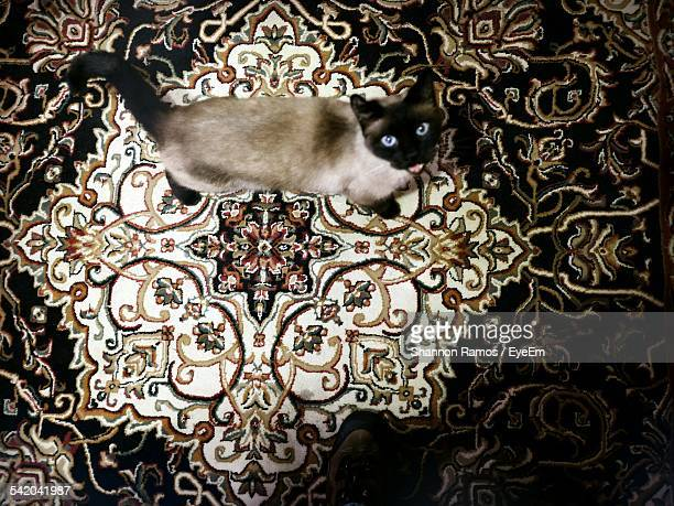 High Angle View Portrait Of Cat On Carpet
