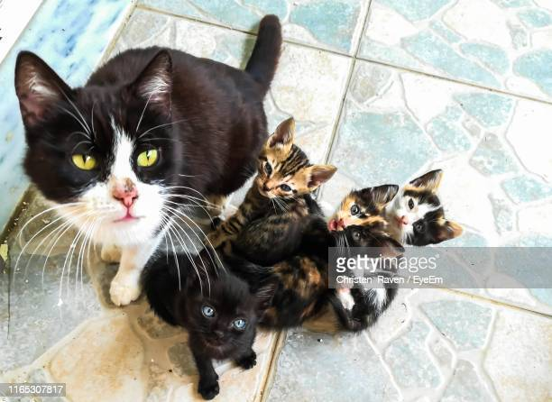 high angle view portrait of cats and kittens on tiled floor - 数匹の動物 ストックフォトと画像