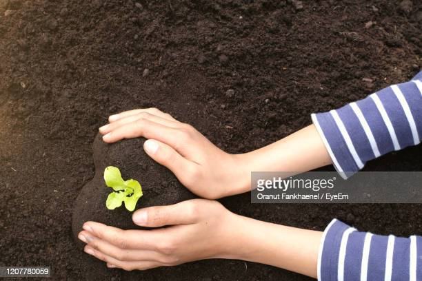 high angle view two hands  holding und growing green seedling. save the nature concept. - earth day fotografías e imágenes de stock