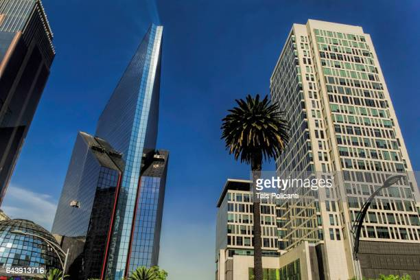 High buildings and palm tree in main street Reforma, Mexico City, Mexico