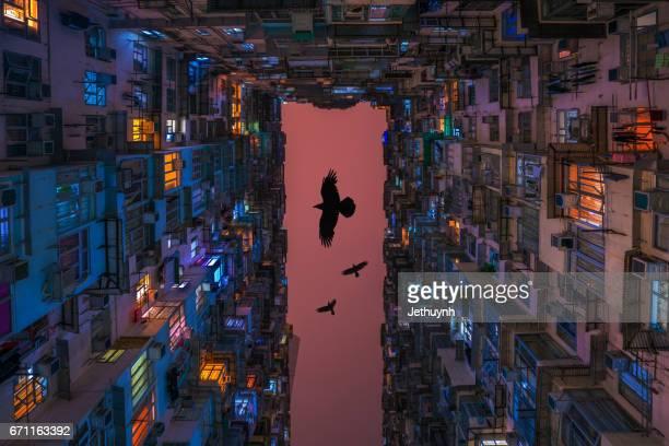 High density of Hong Kong old resident with bird manip