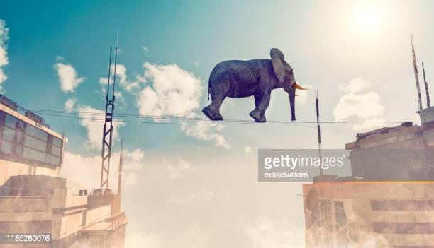 空気中の高い小さなロープに象を歩き、そのバランスを保とうとします - 綱渡りのロープ ストックフォトと画像