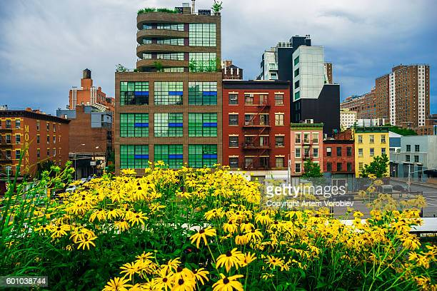 high line park in the summer, new york - sustainable development goals stock pictures, royalty-free photos & images