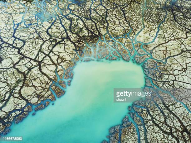 high mineral content wetland - drought stock pictures, royalty-free photos & images