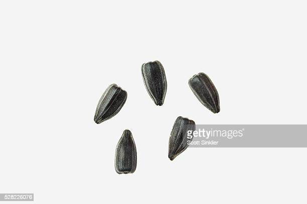 High oil sunflower seeds on a white background