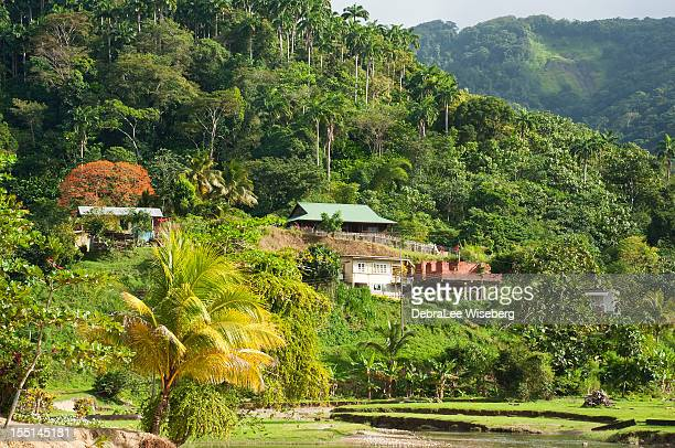 high on the hill - trinidad and tobago stock pictures, royalty-free photos & images