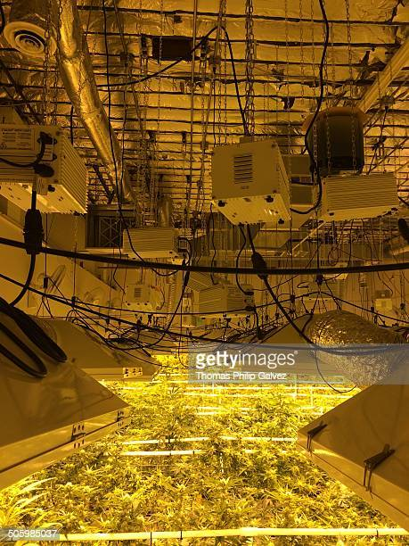 High Pressure Sodium Lights for Growing Marijuana Indoors