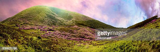 High quality and resolution panorama of Rhododendron mountein.