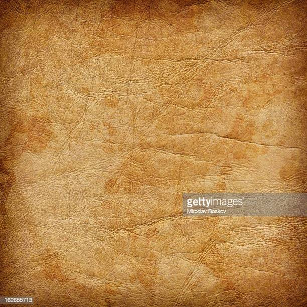 High Resolution Animal Skin Parchment Mottled Vignette Grunge Texture