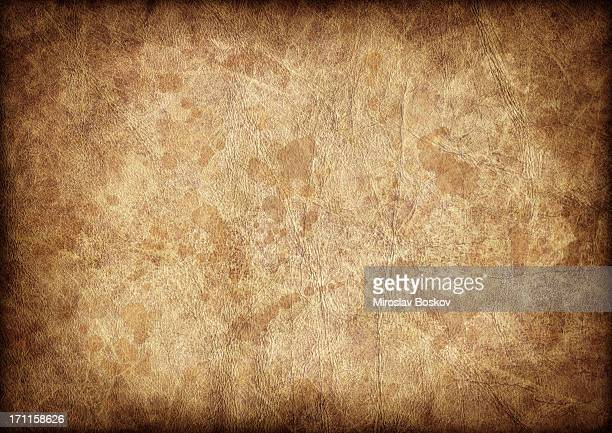 High Resolution Antique Animal Skin Parchment Vignette Grunge Texture
