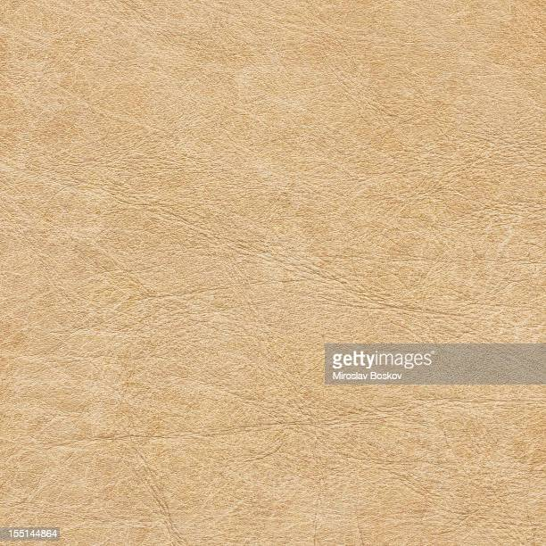 High Resolution Antique Parchment Grunge Texture