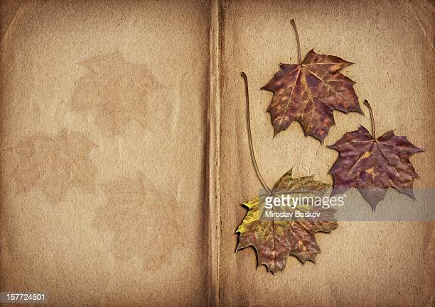 High Resolution Dry Maple Leaves On Open Herbarium Pages