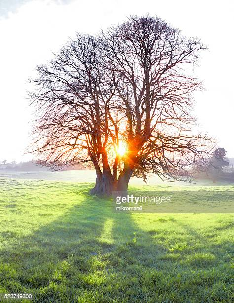 High resolution picture of Single tree at sunrise time on foggy morning.