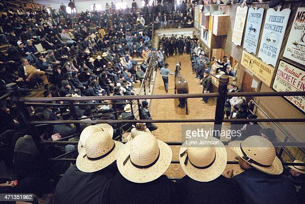 Rear view of young Amish children watching the every other Wednesday horse sale proceedings at Steve Mullet's Mt Hope Auction Perry Reese the black...
