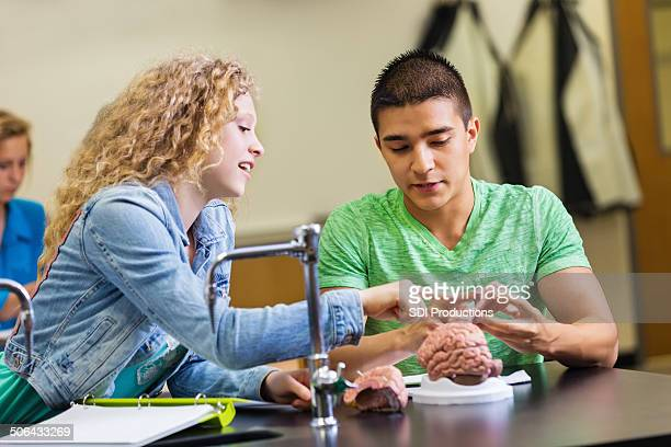 High school lab partners studying brain model in science class