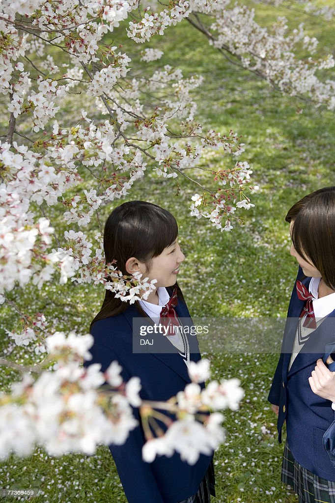 High School Students Talking Under Cherry Blossoms : Photo