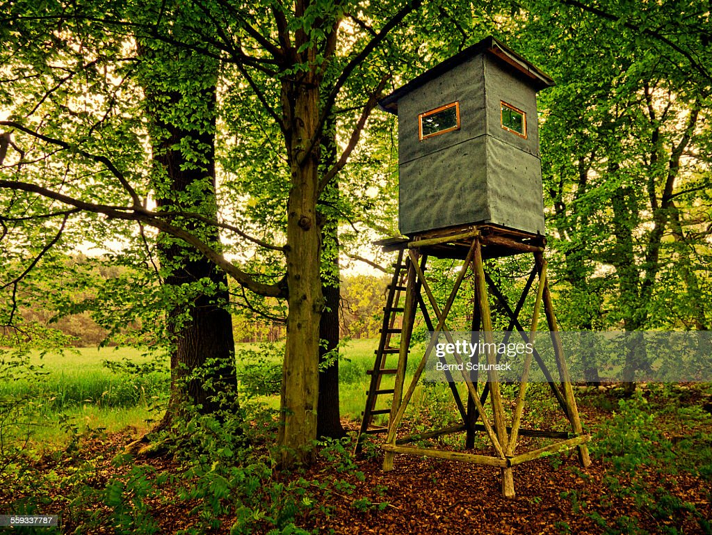 High seat in the forest : Stock-Foto