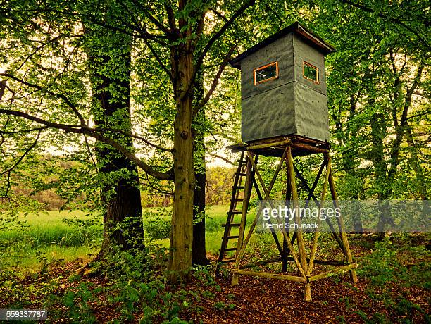 high seat in the forest - bernd schunack stock photos and pictures