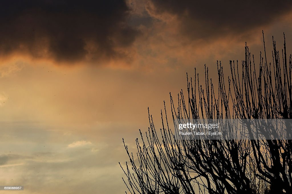 High Section Of Bare Branches Against The Sky : Stockfoto