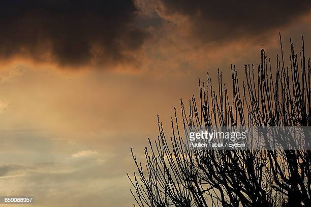 high section of bare branches against the sky - paulien tabak stock pictures, royalty-free photos & images