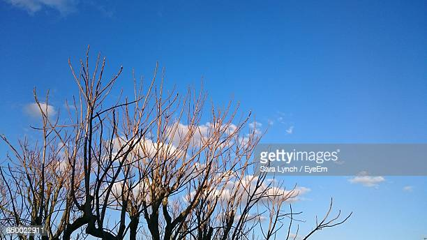 high section of bare tree against blue sky - bethnal green stock pictures, royalty-free photos & images