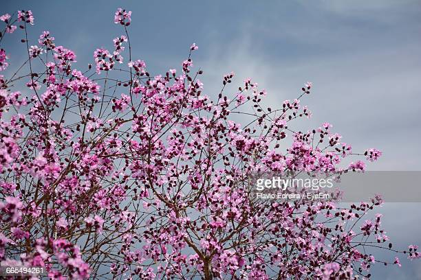 high section of flower trees against the sky - goiania imagens e fotografias de stock