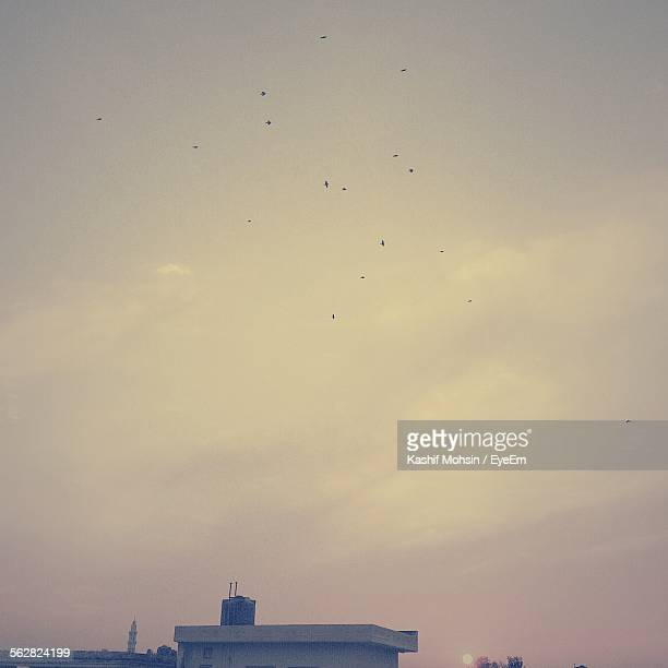 high section of house with flock of birds flying in sky - lahore pakistan stock photos and pictures