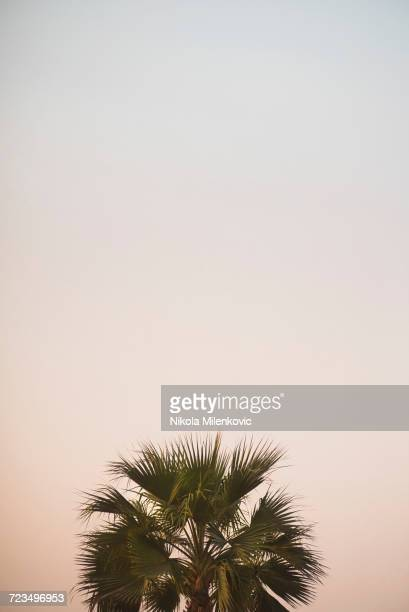 High section of palm tree against clear sky at dusk