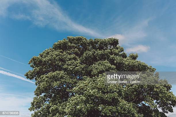 high section of tree against blue sky - bortes stockfoto's en -beelden