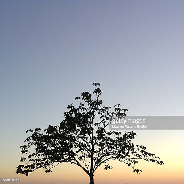 High Section Of Tree Against Sky