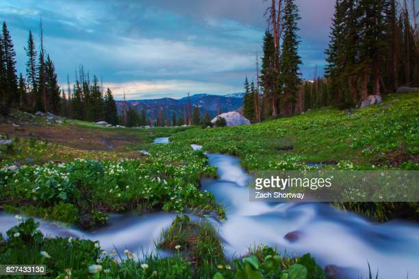 high terrain stream - steamboat springs colorado - fotografias e filmes do acervo
