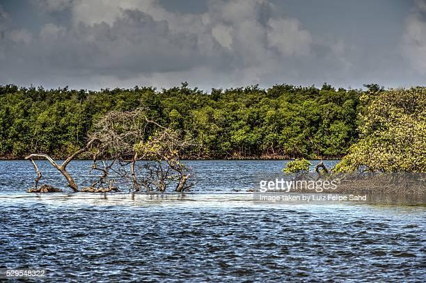 high tide - brasil sergipe aracaju - fotografias e filmes do acervo
