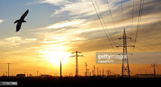 High voltage electricity network and crow