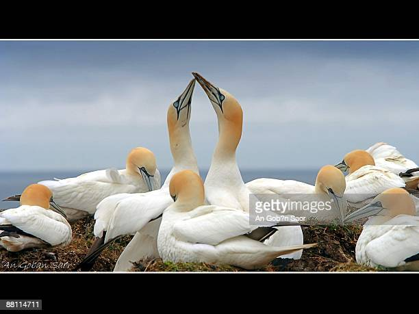 higher - gannet stock photos and pictures