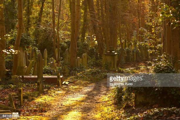 highgate cemetery in a winter morning, london, united kingdom - highgate stock pictures, royalty-free photos & images
