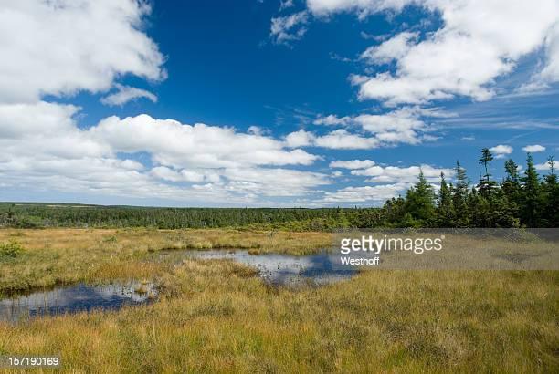 Highland Bog