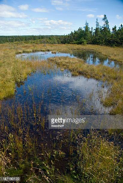 highland bog - bog stock photos and pictures