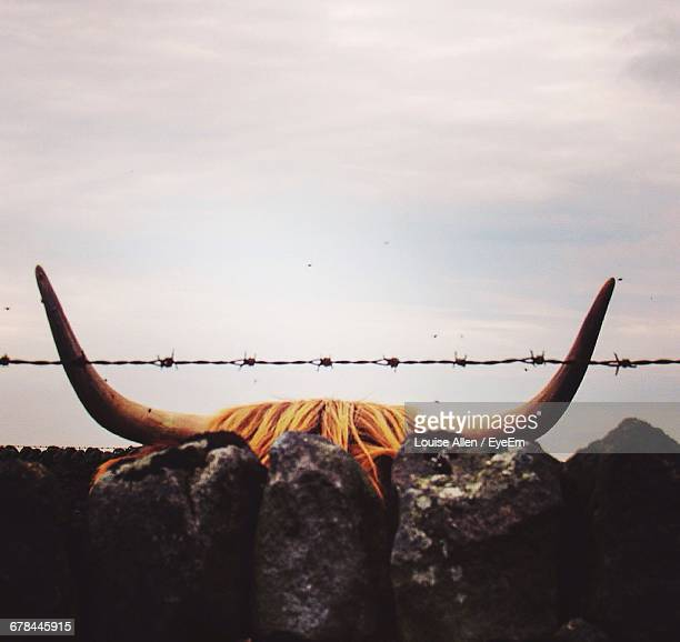 Highland Cattle Behind Fence Against Sky