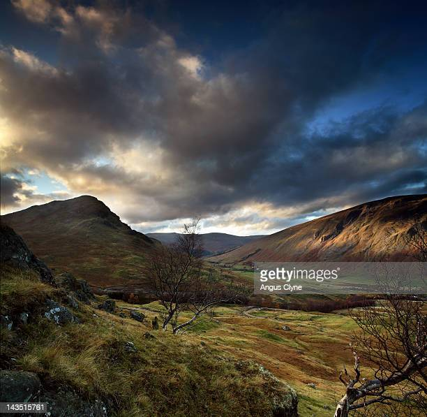 Highland glen birch tree autumn colour
