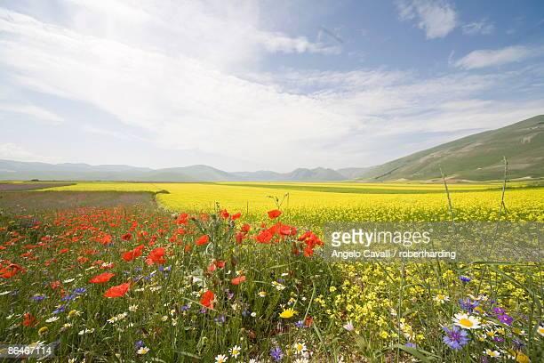 highland of castelluccio di norcia, norcia, umbria, italy, europe - castelluccio stock photos and pictures